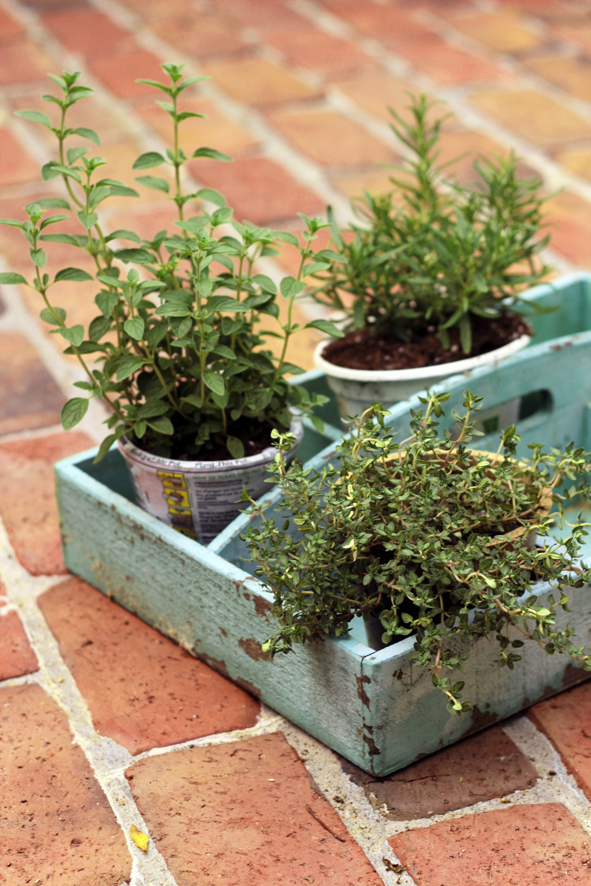 Herbs for your garden and your grill