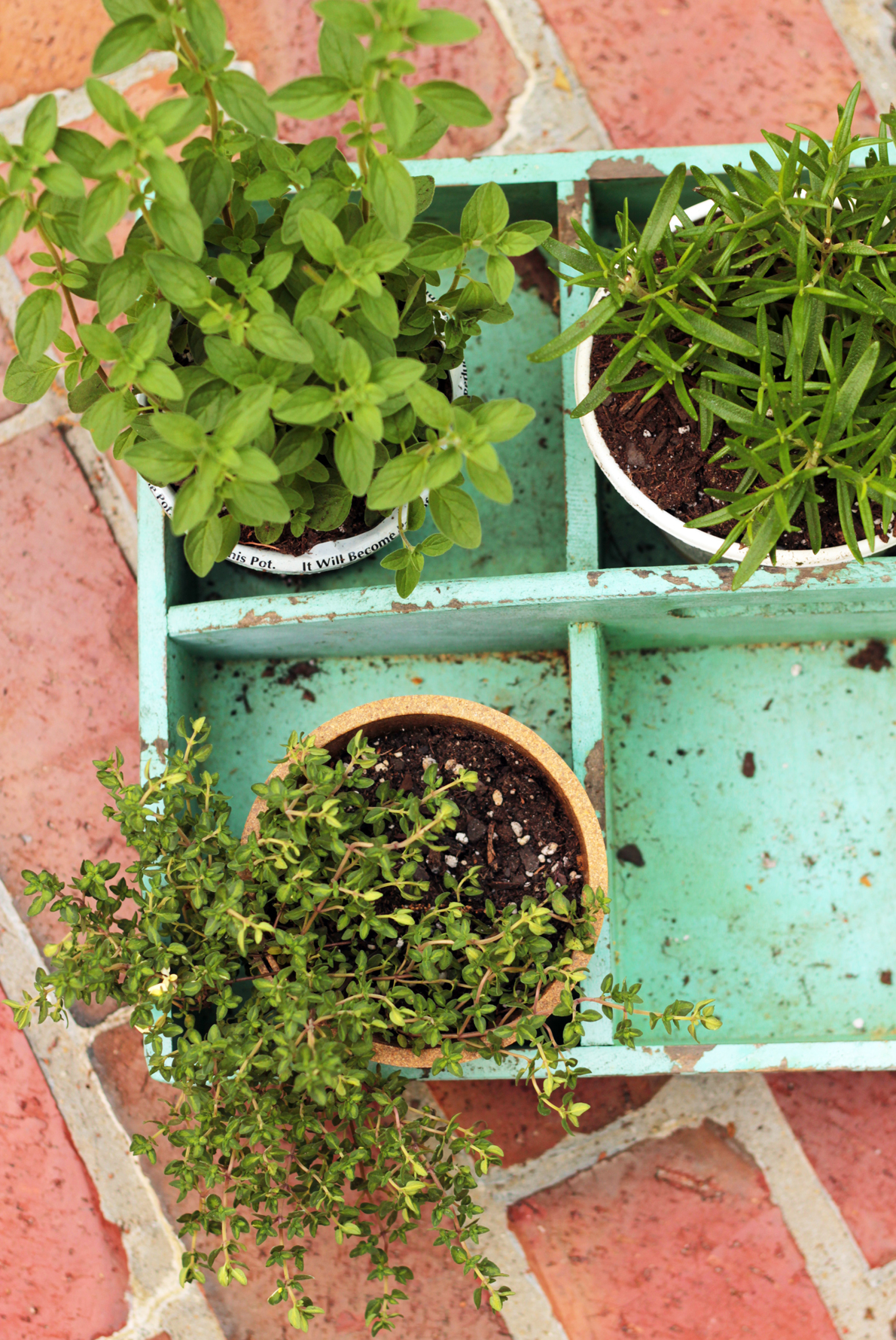 Herbs for the garden and the grill.